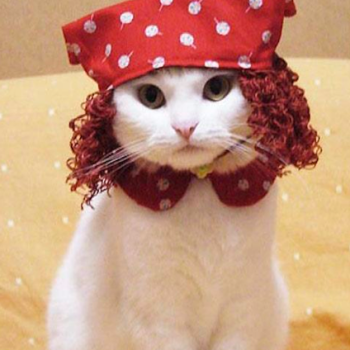 Cat-dress-up