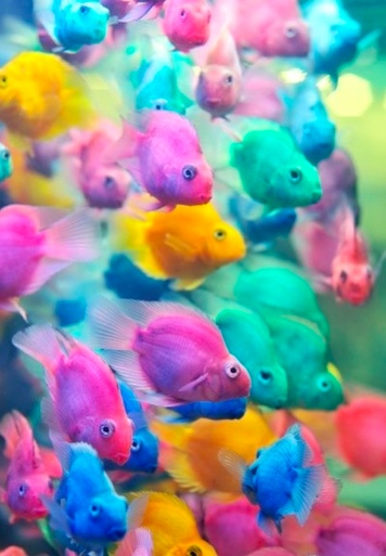 inspiring colourful fish