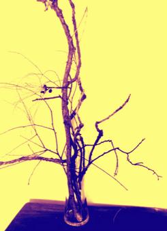branches in vase 2